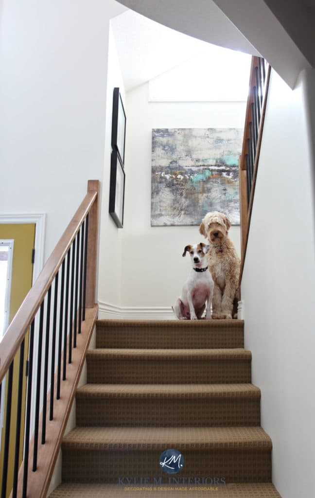 stairway with wood and metal railing, beige carpet, Sherwin Williams Creamy, golden doodle and rescue dog