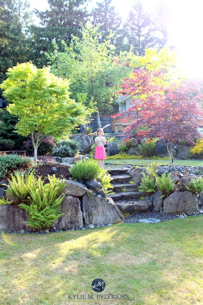 Beautiful backyard landscaping with stone steps and large boulders, ferns and maple trees